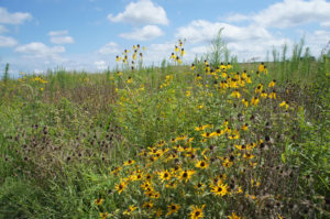 USDA Invests $1.7 Billion to Protect Sensitive Agricultural Lands through CRP