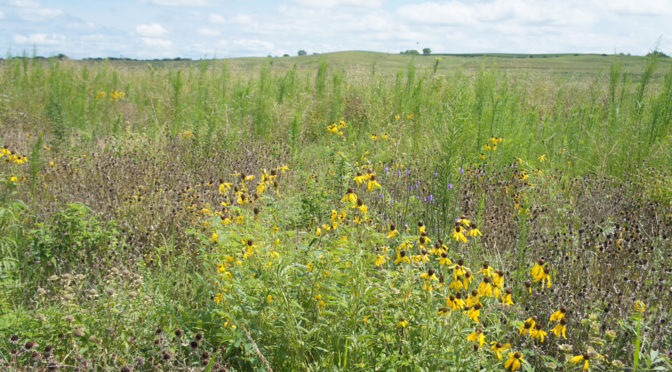 CRP fields in Nebraska. RRN Photo