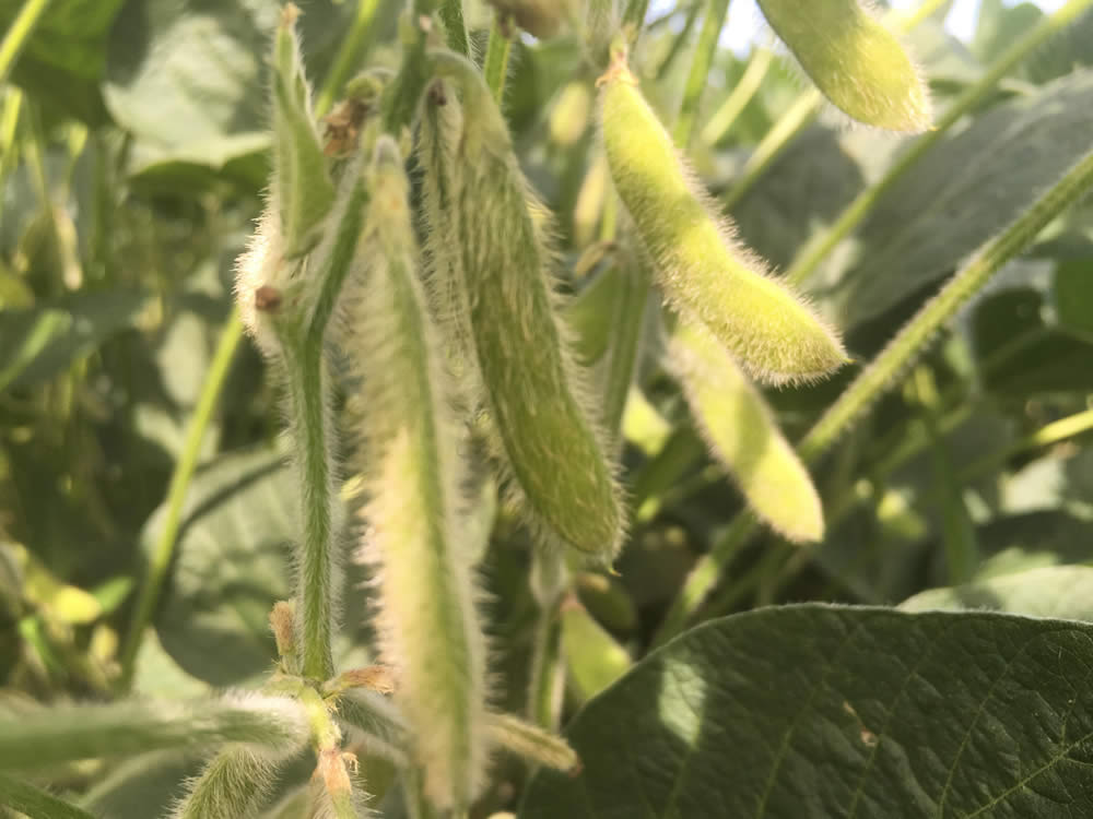 Nebraska Soybean Board to Hold January Meeting