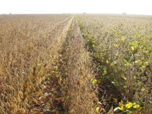 Set Soybean Harvest Goal of 13% Moisture to Aid Profits