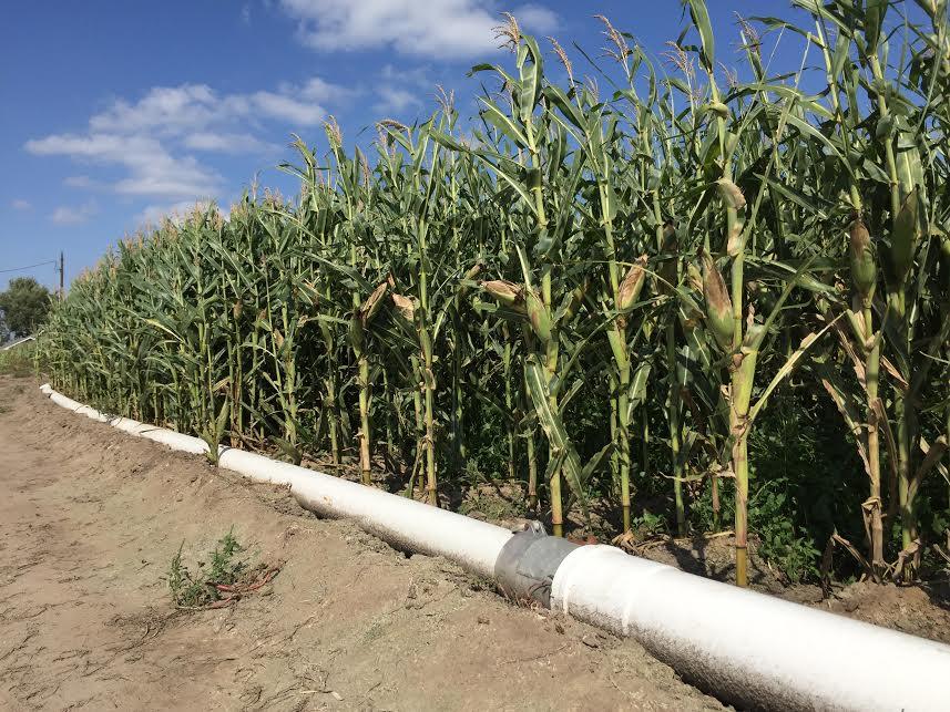 USDA Weekly Crop Progress Bearish for Corn & Soybeans