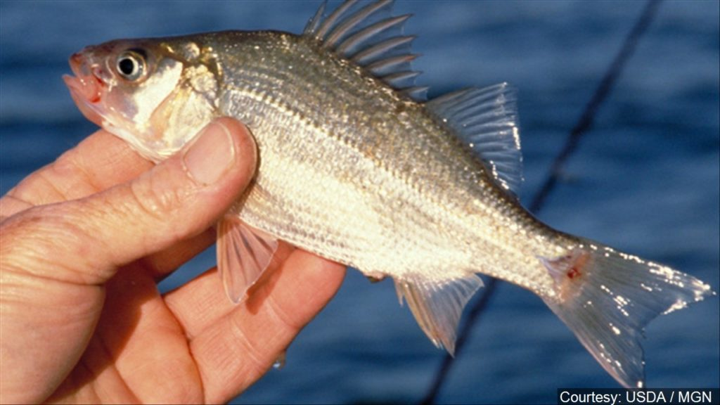 Future of Nebraska's fisheries to be discussed at public meetings