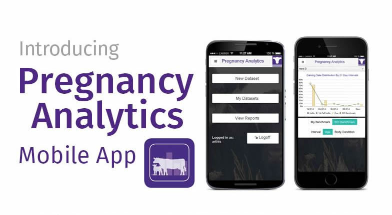 Beef Cattle Institute Launches Pregnancy Analytics Mobile App
