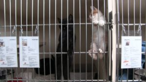 Panhandle Humane Society celebrating National Cat Day with $15 adoptions