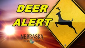 Motorists should use caution to avoid collisions with deer