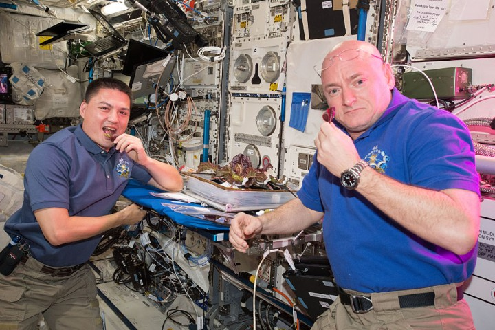 Space Farming? NASA Crew Plants Lettuce on the International Space Station
