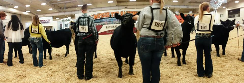 National Junior Angus Show Heads to Des Moines