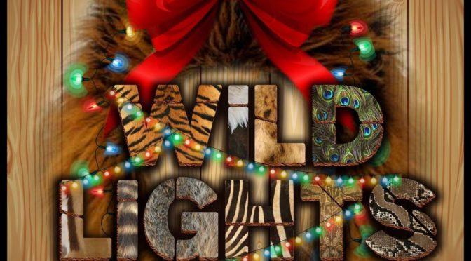 RDC Wild Lights