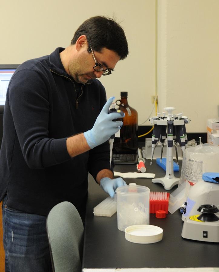NIFA Grant will Boost KSU Efforts to Edit Wheat's Genetic Code