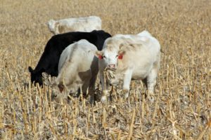 New Online Exchange to Benefit Farmers, Cattle Producers