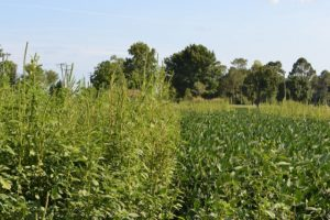 Bayer Joins Others at Global Herbicide Resistance Challenge