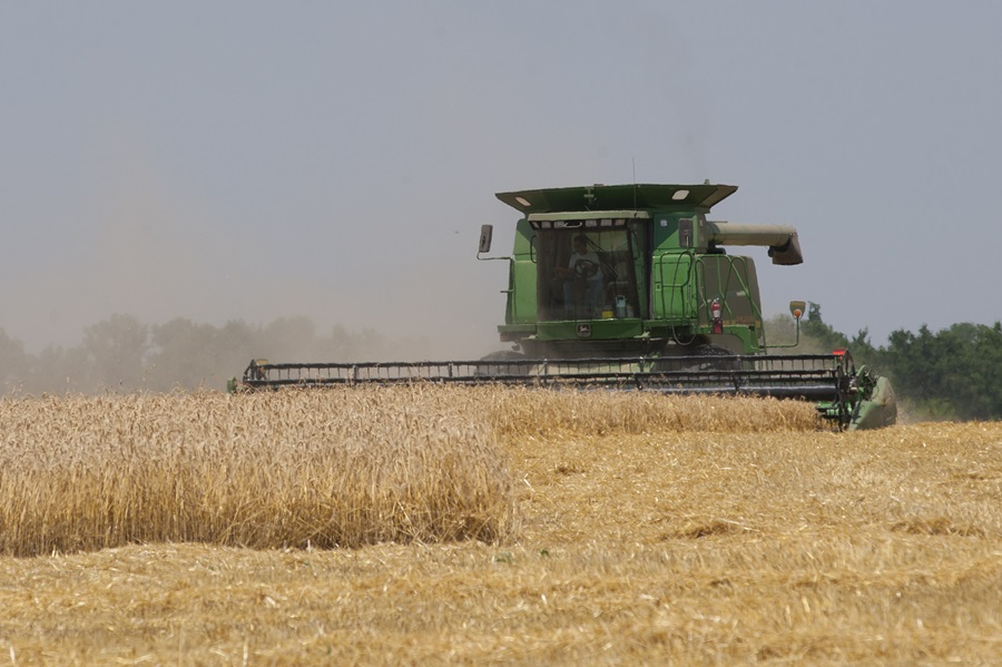 Latest Kansas Wheat Harvest Report Shows Yield Variability