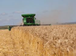 Winners Thrust Sky-High Wheat Yields Into Public Eye