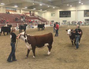 AKSARBEN Stock Show Transitions to Junior Livestock Show Format