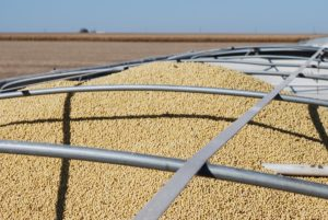 China Commits to Buying More Soybeans