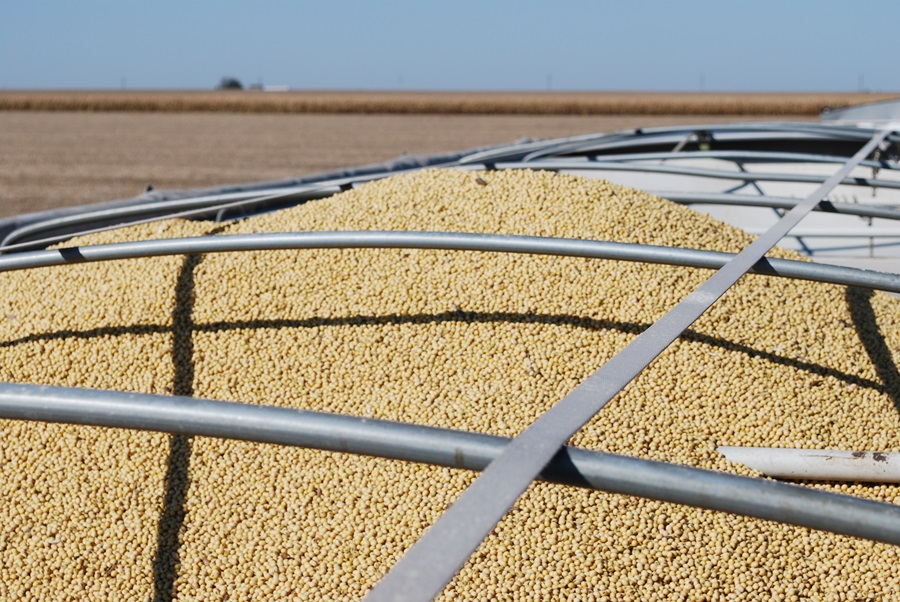 Protein plight: Brazil steals U.S. soybean share in China