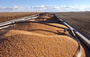 Cornhusker Economics: Thinking About the Corn Market