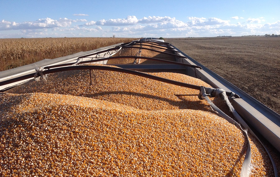 USDA Says 152,000 MT of Corn Sold to Mexico