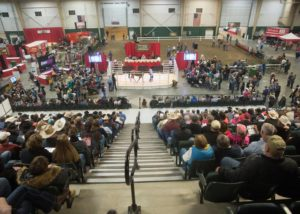 Twenty-one Ranch Horses Sold in the 2017 NCC Working Ranch Horse Sale
