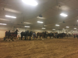 The 26th Annual Nebraska Cattlemen's Classic Commences with Trailersfull of Horses