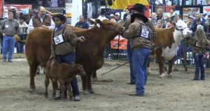 (VIDEO) NCC Names Supreme Row Bull And Heifer
