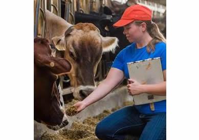 More women entering dairy industry in Wisconsin
