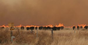 EQIP funds, CRP grazing available to ranchers hit by wildfire