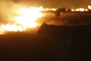 Cattlemen's Foundation Collecting Donations for Wildfire Victims