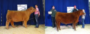 Maronde and Jones Top Cattlemen's 47th Annual Beef Show