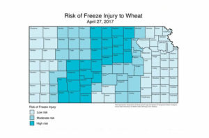 Effect of KS Wheat From Freeze on April 27