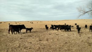 Is creep feeding beef calves profitable?