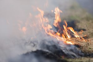 Prescribed burning scheduled in the panhandle