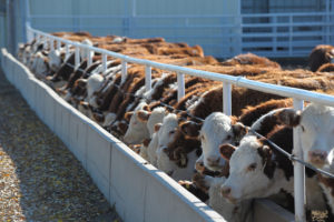 United States Cattle on Feed Up 3 Percent