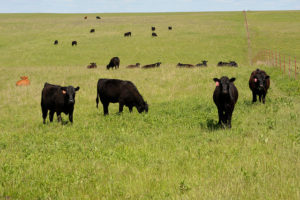 Emergency Grazing of CRP CP25 Now Available in Some Kansas Counties