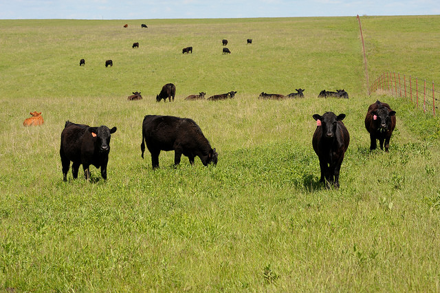 Great Plains Grazing to host May 25 webinar on 'limit feeding' during drought