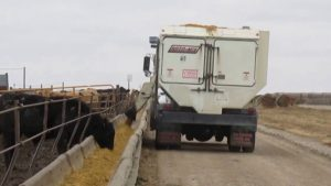 USDA Releases Bearish Cattle On Feed Report