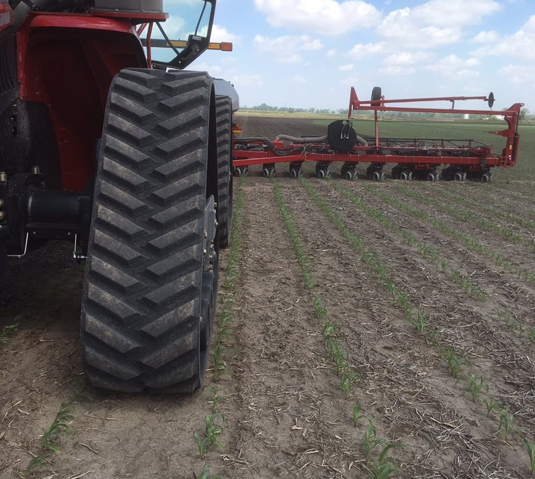Corn Replant Nears Historic Levels