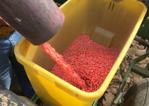What EPA's Latest Neonic Documents Mean for Farmers