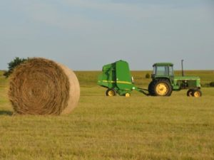 Thune Urges USDA to Reverse Requirement to Destroy Usable CRP Hay
