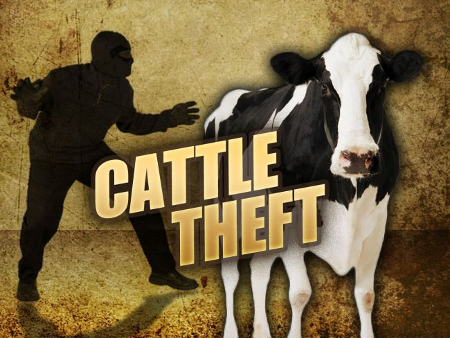 Wagner Man Accused in Theft of Cattle and Feed Checks