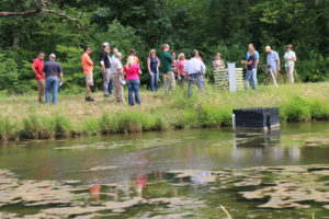 Constructed Wetlands Show Promise in Managing Nutrients