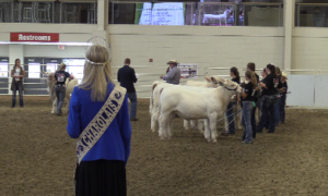 (VIDEO) Record Attendance Set for Junior National Charolais Show Held in Grand Island