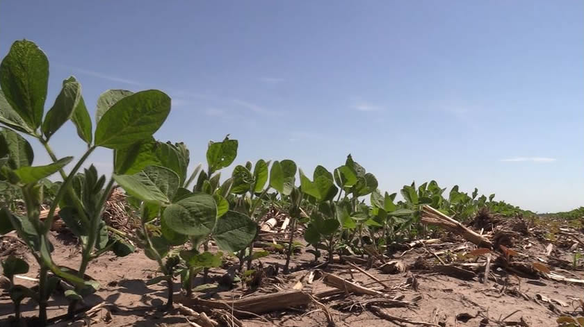 First Soy Condition Rating of Year Lowest in Four Years