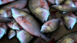 Fish killed in Nebraska after water diversion stops