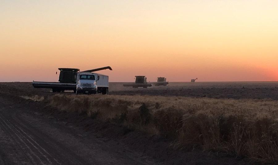 Hot Weather Aiding Nebraska Wheat Harvest
