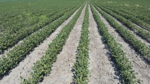 Nebraska Farmer Sues Over Crop Damage From Herbicide