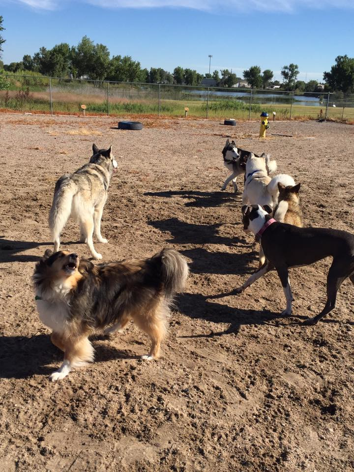 Gering council approves keno funds for dog park