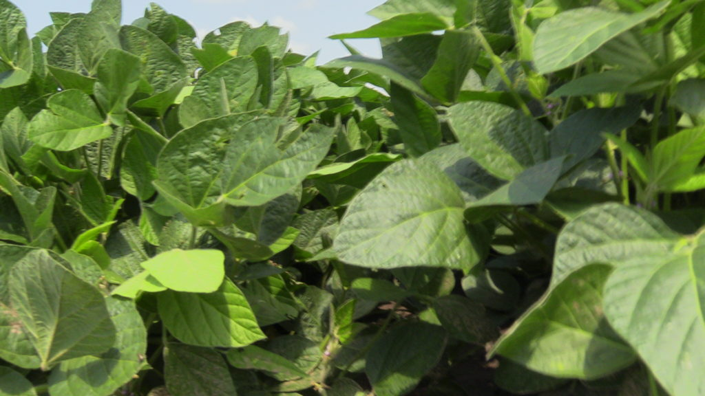 Expansion in Soy Acres Drives Checkoff Investments