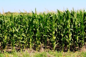 Industry Leaders Tout Crop Insurance Benefits at Senate Hearing