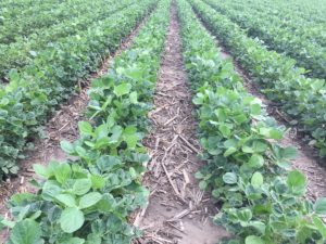 Monsanto and 2Blades Foundation Collaborate to Combat Devastating Soybean Disease